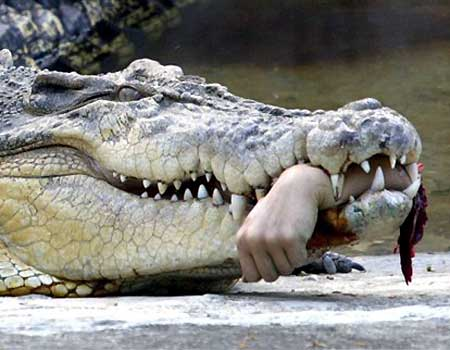 Click image for larger version  Name:0412070936_M_041207_croc.jpg Views:851 Size:25.4 KB ID:17031