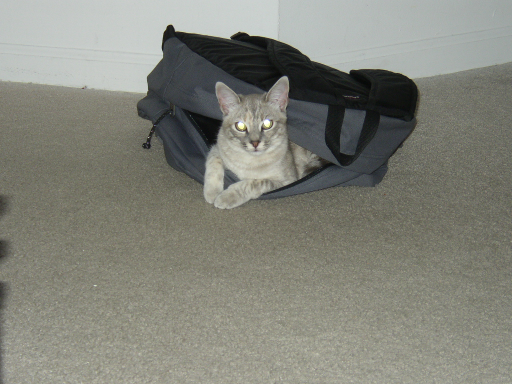 Click image for larger version  Name:back pack cat.JPG Views:44 Size:439.7 KB ID:659
