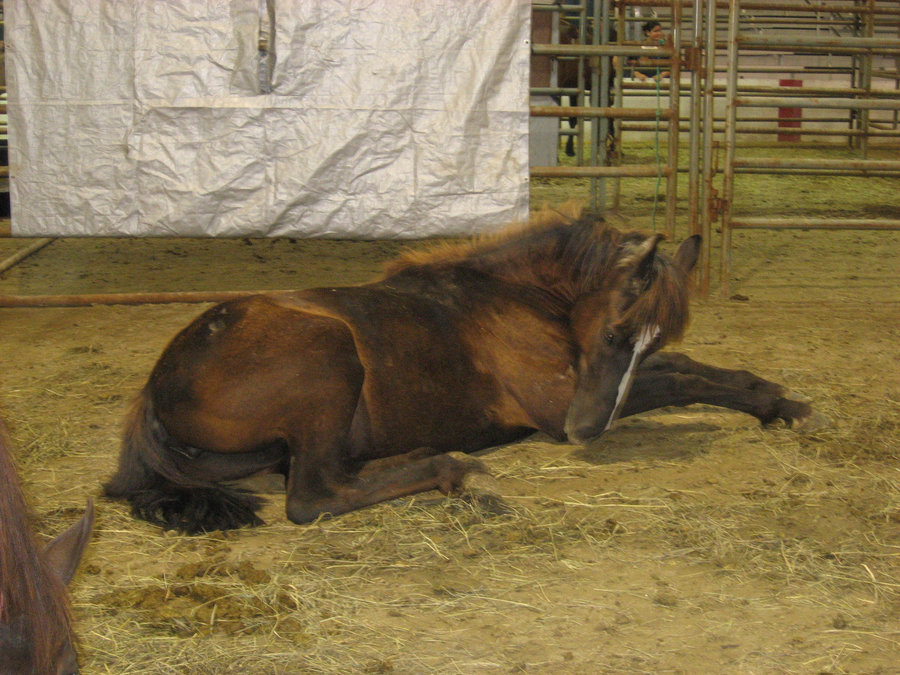 Click image for larger version  Name:Brown_Mustang_by_horse_stock_maze.jpg Views:86 Size:179.6 KB ID:144606
