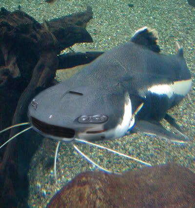 Click image for larger version  Name:CamaroFish.jpg Views:102 Size:37.7 KB ID:157560