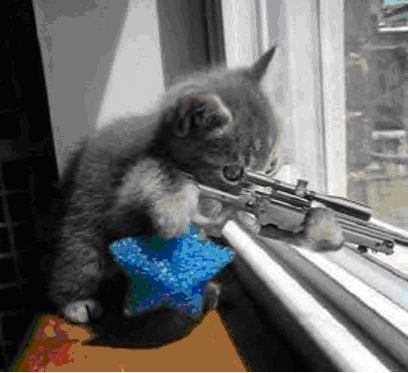 Click image for larger version  Name:Cat_With_Rifle.jpg Views:42 Size:23.5 KB ID:16848