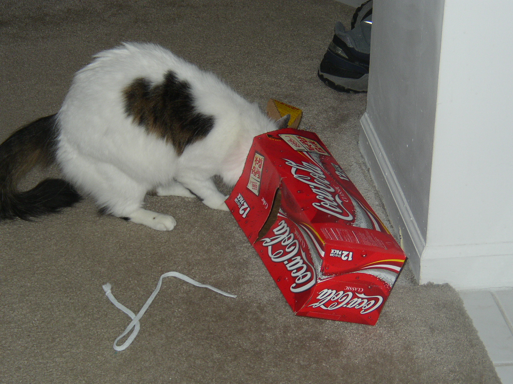 Click image for larger version  Name:coke box cat.JPG Views:56 Size:515.8 KB ID:656