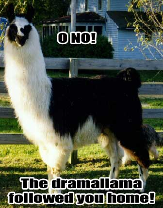 Click image for larger version  Name:dramallama2.jpg Views:120 Size:25.5 KB ID:10666