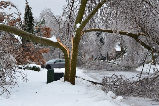 Click image for larger version  Name:fallen_tree.jpg.size.xxlarge.promo.jpg Views:151 Size:63.6 KB ID:146468