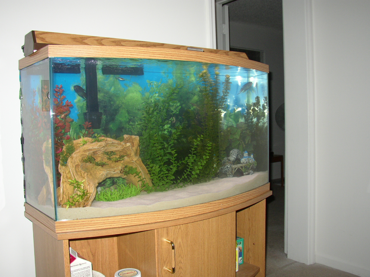 Click image for larger version  Name:fish tank.JPG Views:46 Size:802.5 KB ID:660