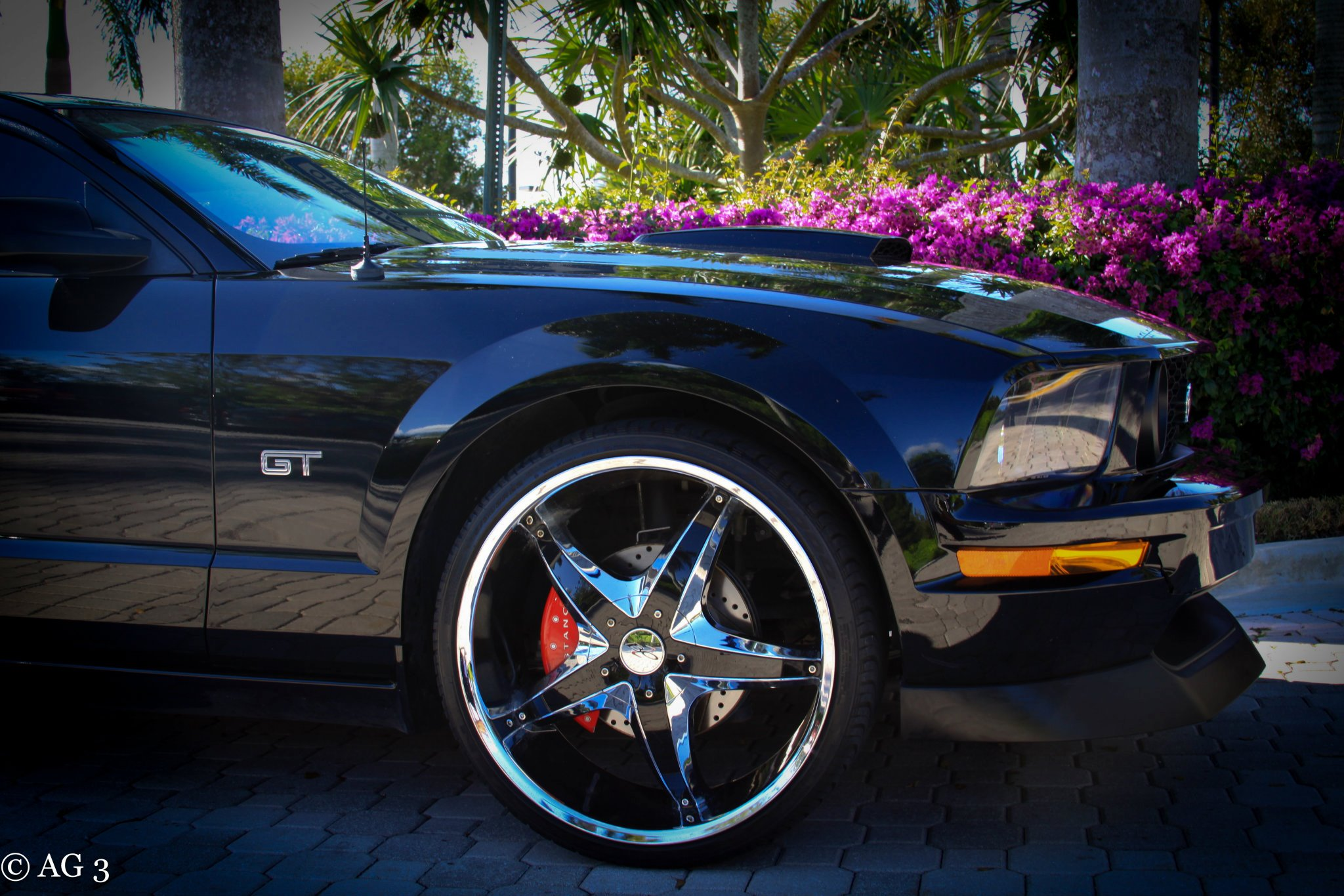 Click image for larger version  Name:FORIST'S MUSTANG14.jpg Views:194 Size:442.0 KB ID:55277