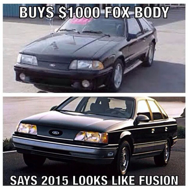 Click image for larger version  Name:Fox.jpg Views:1583 Size:219.6 KB ID:169023