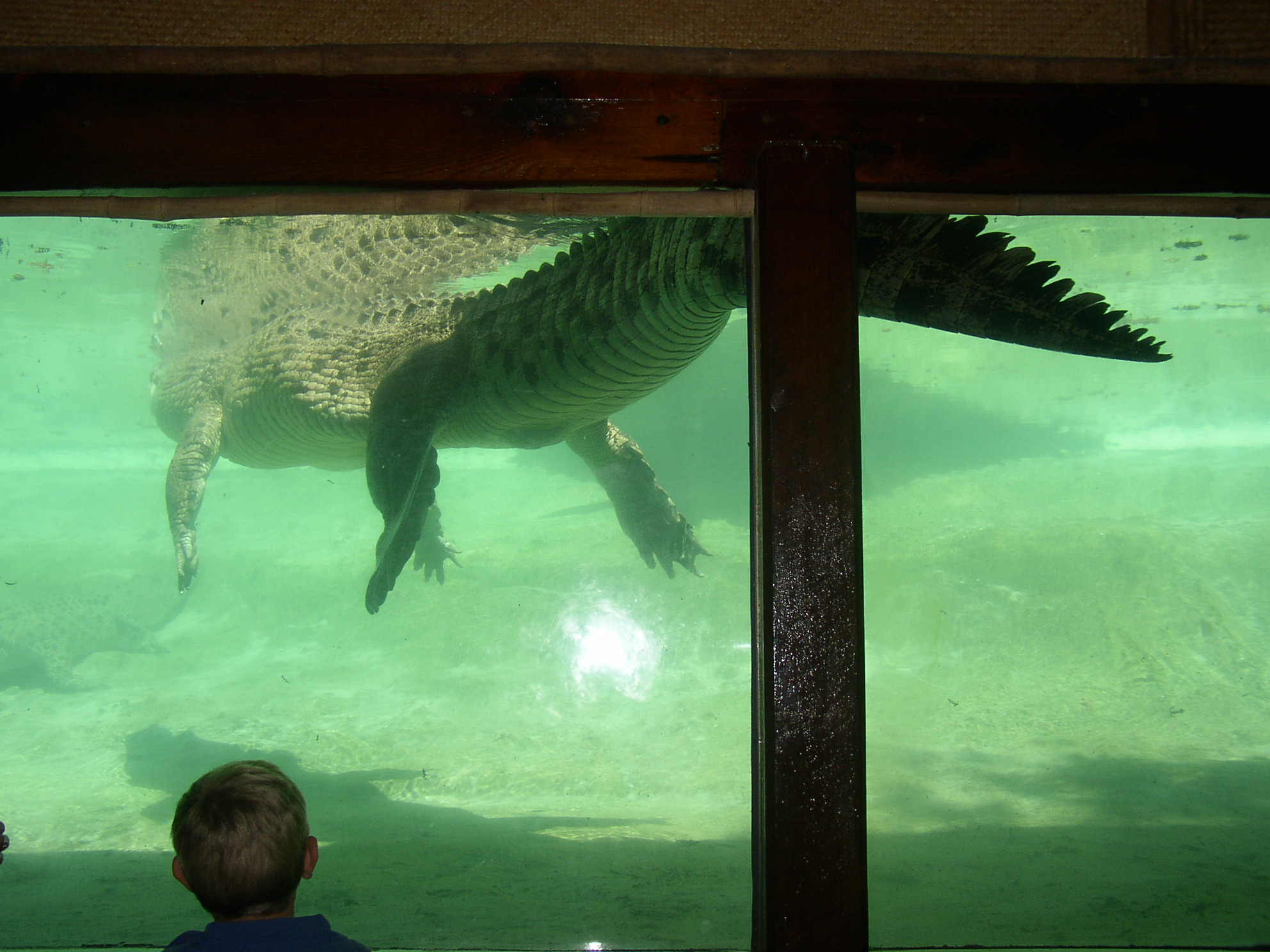 Click image for larger version  Name:gator.jpg Views:120 Size:663.5 KB ID:8309