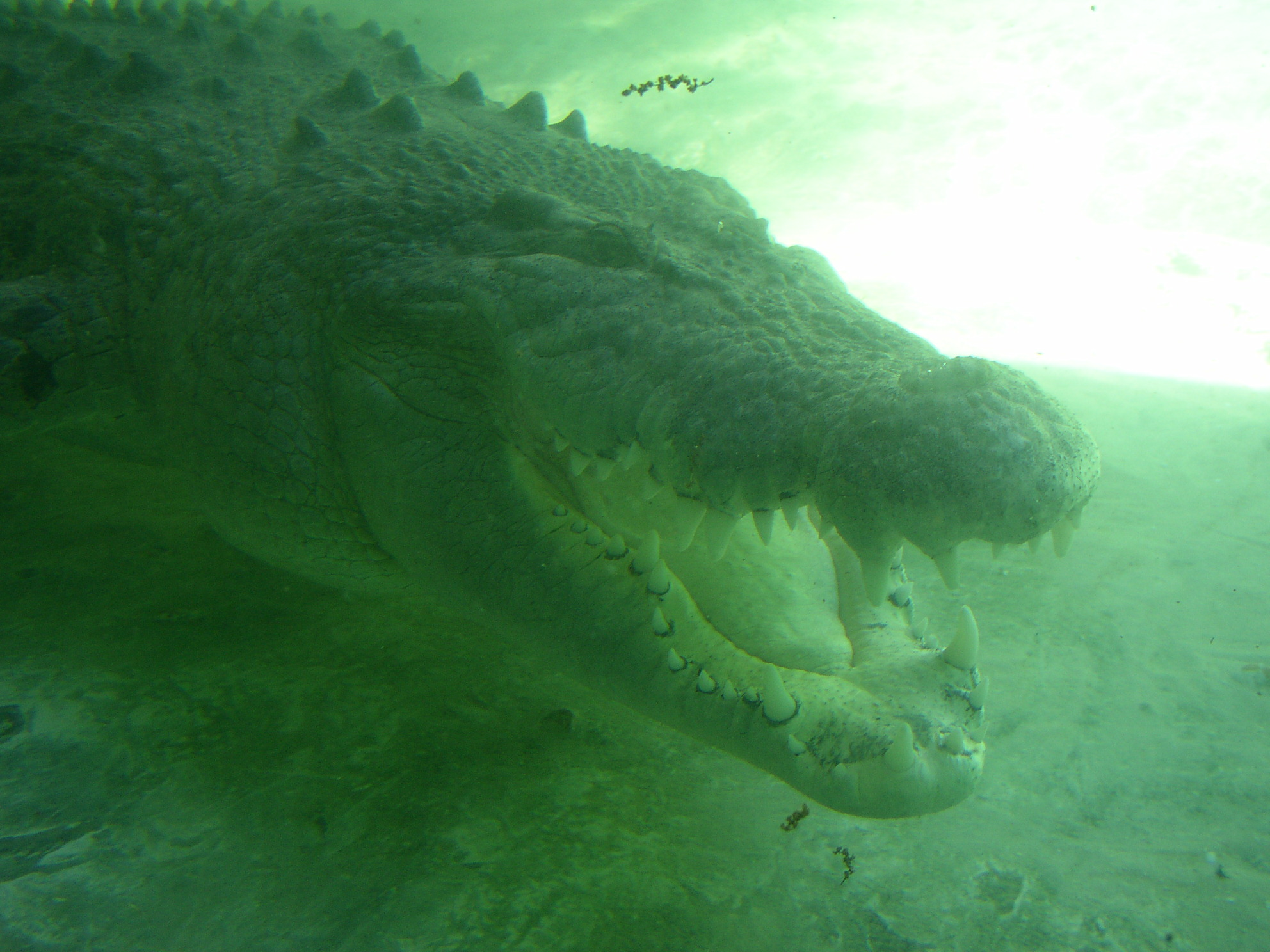 Click image for larger version  Name:gator2.jpg Views:123 Size:608.0 KB ID:8310