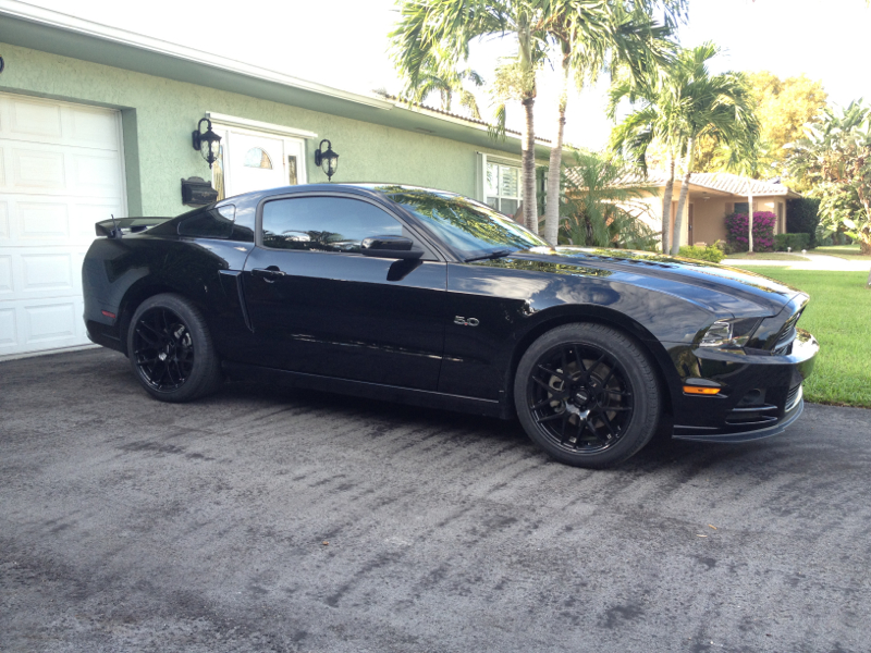 50 Badge  Mustang Evolution