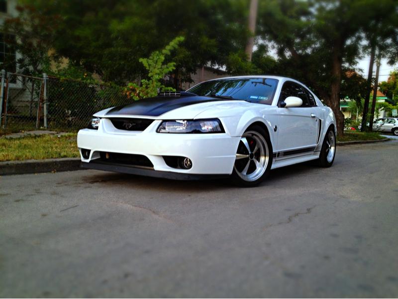White Mustangs Forum Evolution Mustang
