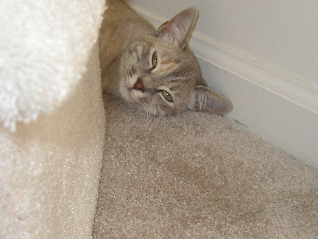 Click image for larger version  Name:lazy cat1.JPG Views:58 Size:543.3 KB ID:657