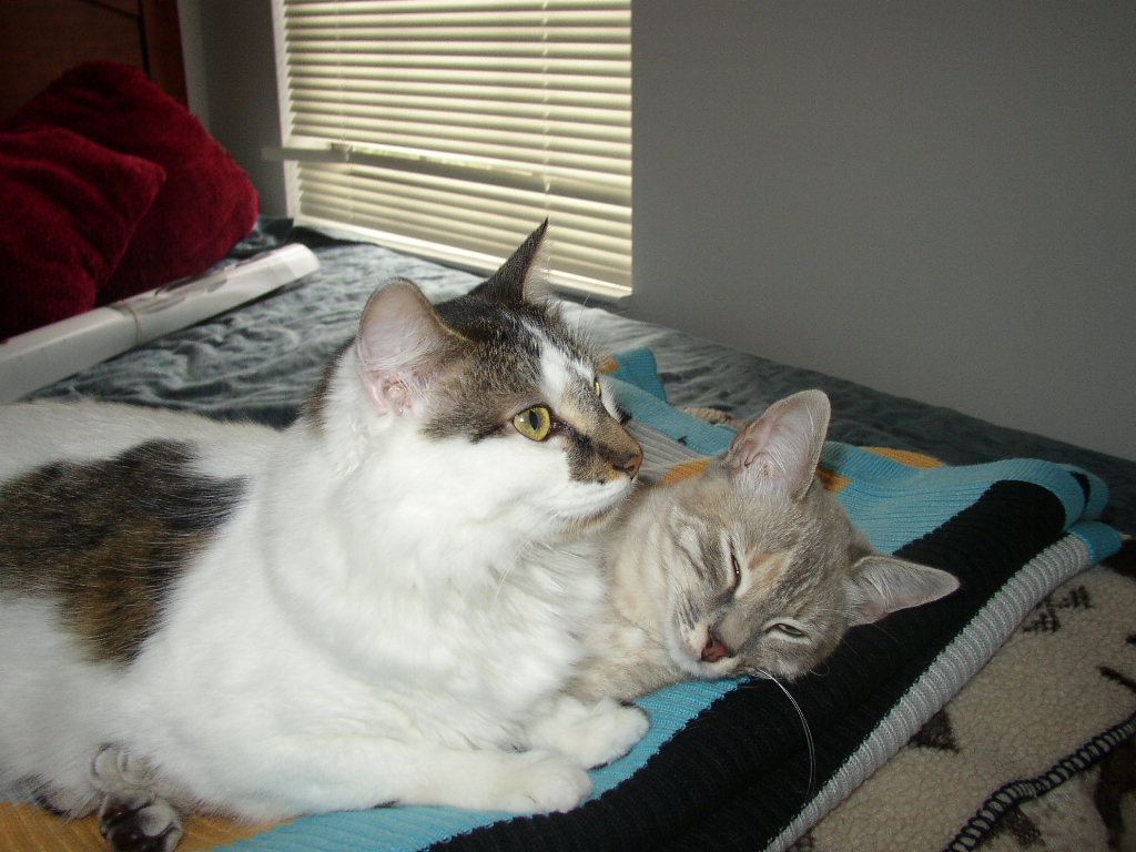 Click image for larger version  Name:lazy cats.JPG Views:60 Size:557.7 KB ID:658