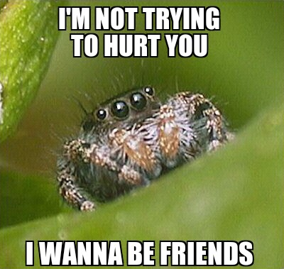 Click image for larger version  Name:Misunderstood Spider.jpg Views:115 Size:54.7 KB ID:94337