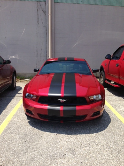 Click image for larger version  Name:Mustang 2.jpg Views:113 Size:105.0 KB ID:114885