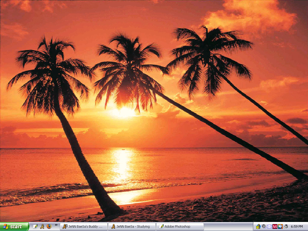 Click image for larger version  Name:palmtrees.jpg Views:4088 Size:238.2 KB ID:6361