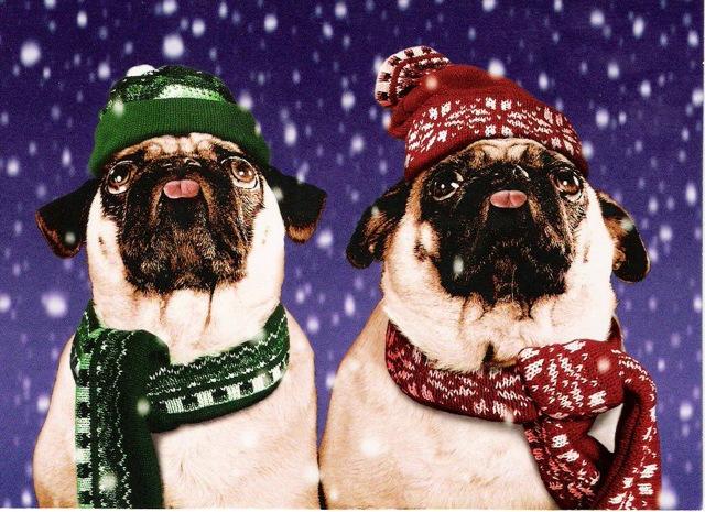 Click image for larger version  Name:Pug Christmas.jpg Views:13391 Size:152.5 KB ID:20021