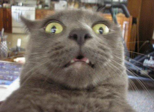 Click image for larger version  Name:shocked_cat.jpg Views:7297 Size:28.7 KB ID:90892