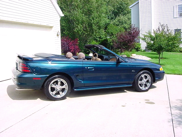 Click image for larger version  Name:stang2.jpg Views:94 Size:214.2 KB ID:2206