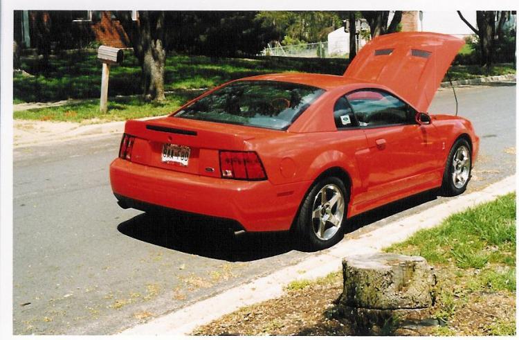 2004 Cobra-Competition Orange