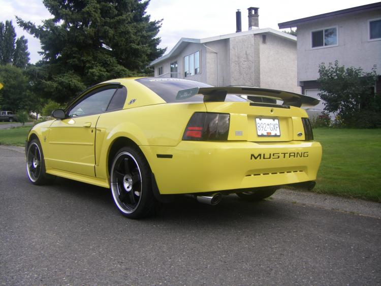 Brians Stang 5