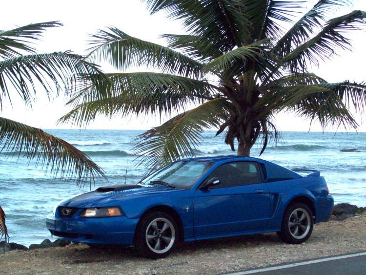 Mustang 1655