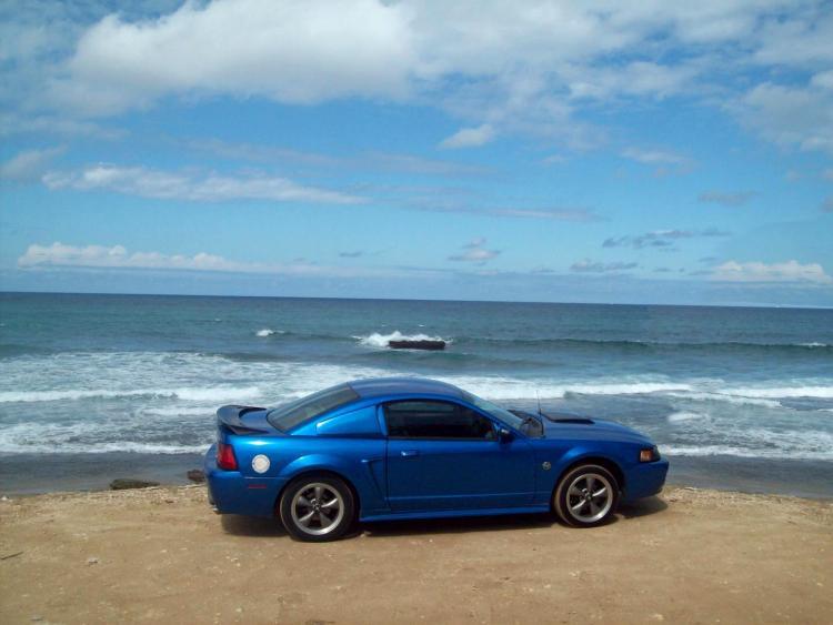 Mustang at beach 2488