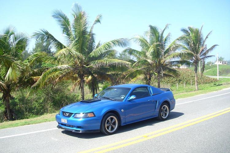 Mustang on road 2