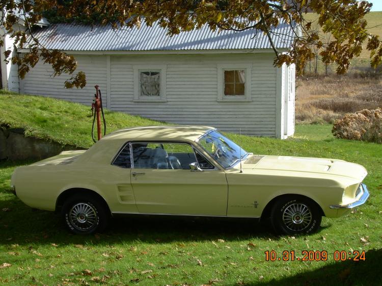 Mustang pics 019