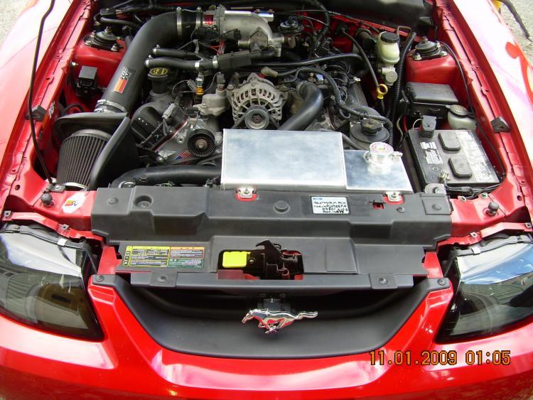 Mustang pics 027