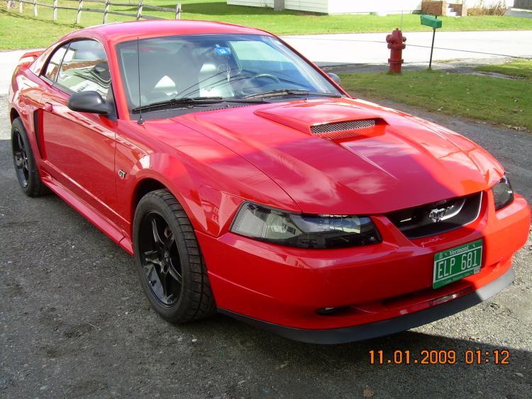 Mustang pics 030
