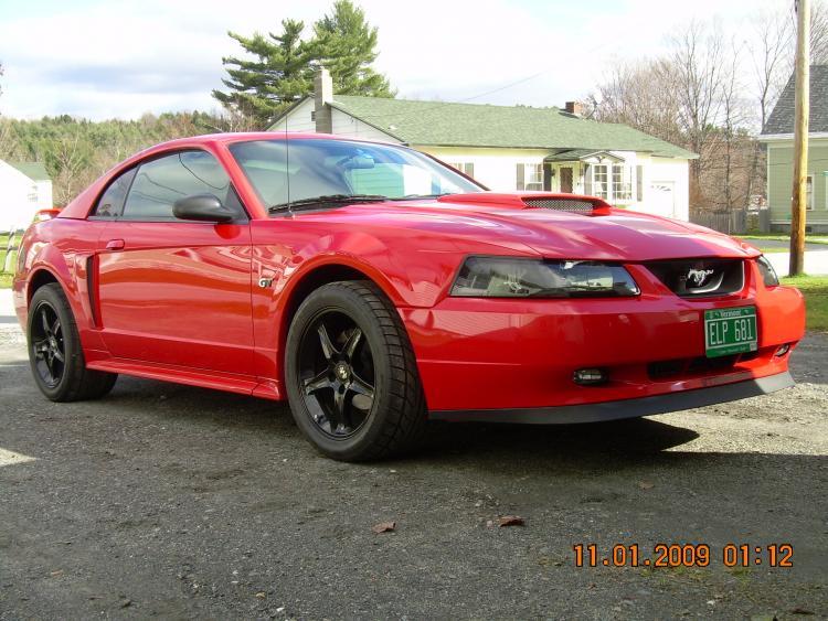 Mustang pics 031