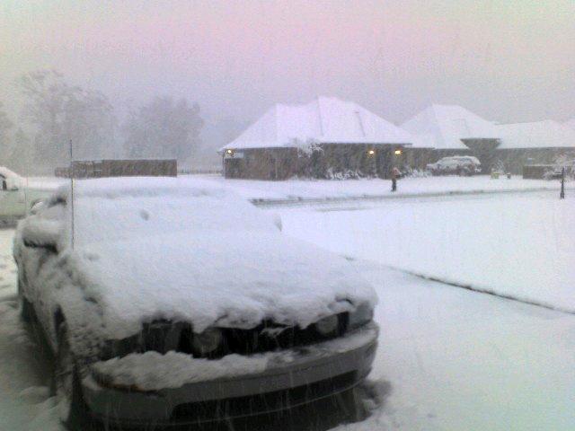 mustang under snow