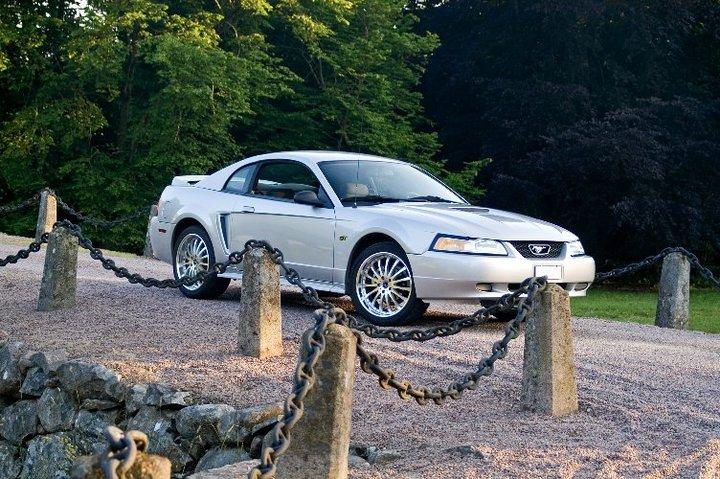 My Mustang 2