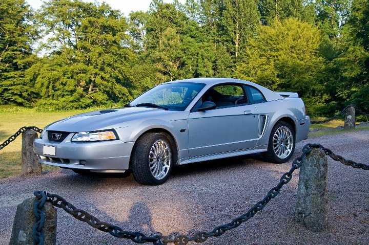My Mustang 4