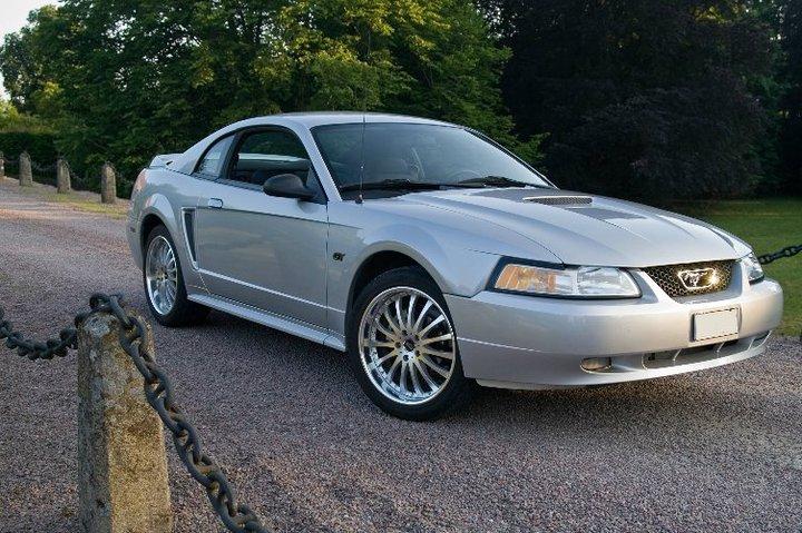 My Mustang 5