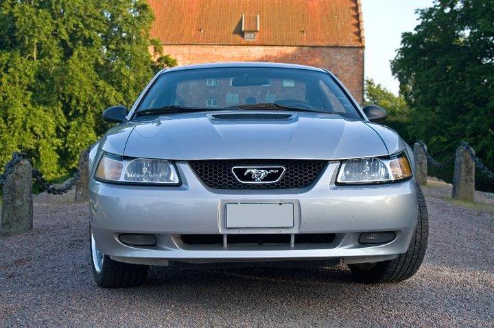 My Mustang 9