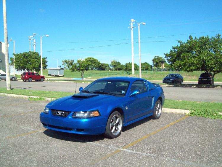 Steve's Mustang 2333