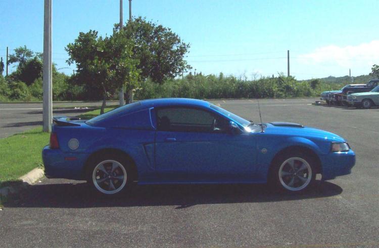 Steve's Mustang 2336
